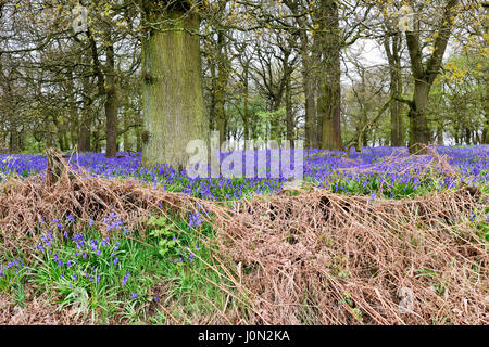 Underwood, Nottinghamshire, UK. 14th Apr, 2017. A dull damp start to the Easter bank holiday, an ideal day for a - Stock Photo