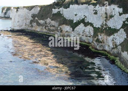 The white cliffs of Studland, Dorset, UK - Stock Photo