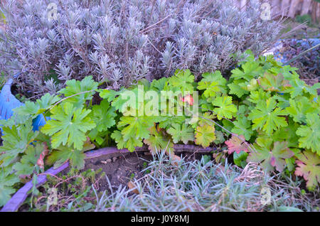 Perennial flower bed in early spring - Stock Photo