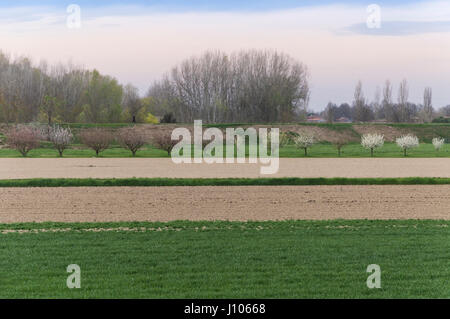 Countryside view with trees and field in rows, soft colours - Stock Photo