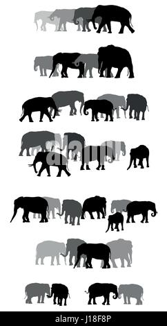 Set of vector family group of black and grey standing indian and african elephants on white background - Stock Photo