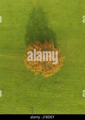 Tree in autumn- Baum im Herbst - Stock Photo