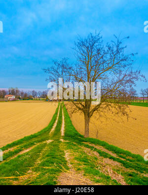 Really saturated landscape with a central tree without leaves - Stock Photo