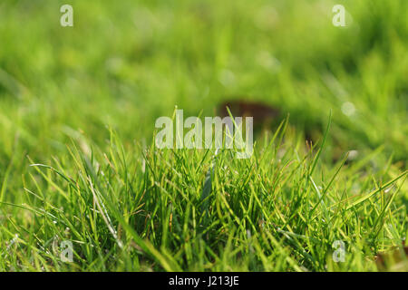 green grass in first warm spring sunny days, closeup shot - Stock Photo