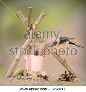 close up of  female bullfinch standing with a bucket and campfire - Stock Photo