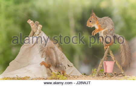 close up of  red squirrel standing on a bucket with campfire with another squirrel on a teepee - Stock Photo