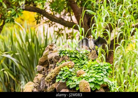 Water fountain in carlton gardens adjacent to royal for Garden pond melbourne