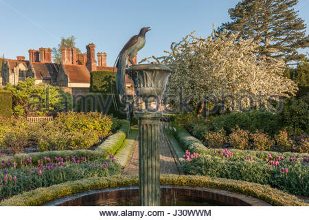 Boxwood hedges in a rose garden design marianne and for Spring hill nursery garden designs