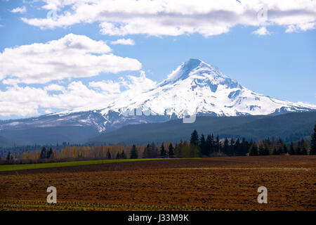 Plowed field with the first shoots of plants on the background fields, trees, hills, snowy mountains and cloudy - Stock Photo
