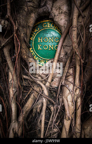 Aerial Roots Of A Ficus Tree In The Tirta Empul Water