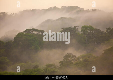 Misty rainforest after rainfall in Soberania national park, Republic of Panama. - Stock Photo