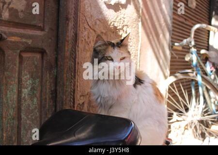 Cat on bike seat Marrakech, Morocco - Stock Photo
