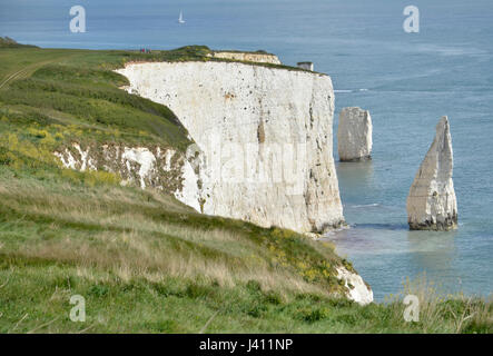 The Pinnacles, a series of chalk sea stacks off the Dorset coast at Studland - Stock Photo