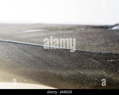 close up black and white feather texture on a white background macro - Stock Photo