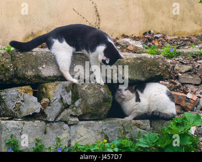 A cunning cats fighting among the stones - Stock Photo