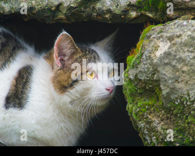 A cunning cat hides among the stones close up - Stock Photo