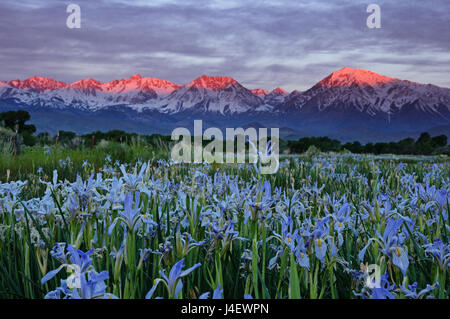 field of wild flowers and mountain valley banff national park stock photo royalty free image. Black Bedroom Furniture Sets. Home Design Ideas