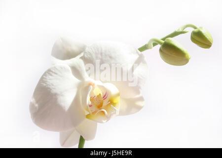 shine shines bright lucent light serene luminous macro close-up macro admission - Stock Photo