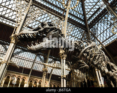 Oxford University Museum Of Natural History Entrance Fee