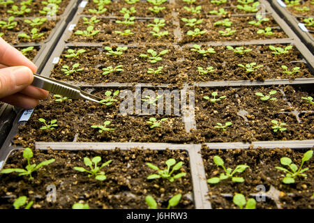 hand macro close-up macro admission close up view closeup garden ground soil - Stock Photo