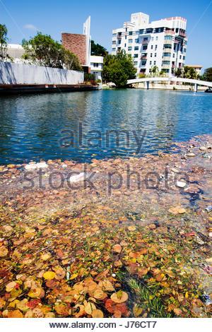 Indian Creek Park Miami Beach