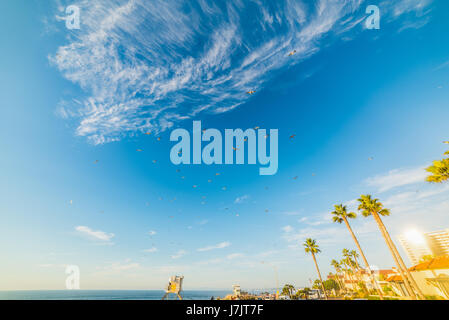 Flock of seagulls flying over La Jolla at sunset, California - Stock Photo