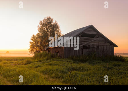 A lonely barn house on a very misty field during the midsummer sunset. The sun hardly sets in the rural areas of - Stock Photo
