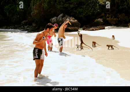 Tourists feeding crab-eating macaques at the beach on Phi Phi Don Island, Krabi Province, Thailand. Koh Phi Phi - Stock Photo