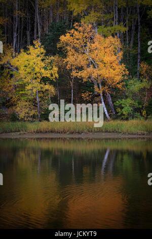 Stock Photo Autumn Poplar Tree Reflected In The Blue Water Of Lake Rua...