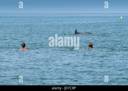 Woman Swimming With Dolphins Stock Photo Royalty Free