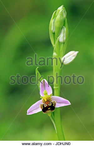 native, flower, orchid, plant, macro, close-up, macro admission, close up view, - Stock Photo