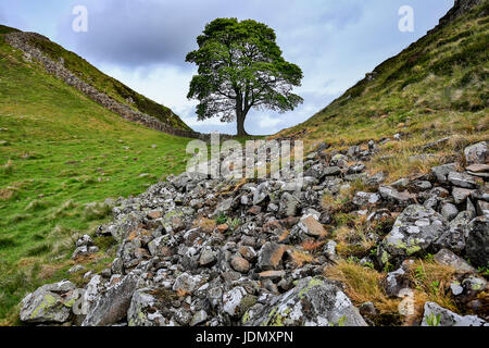Sycamore Gap, Hadrian's Wall, near Homesteads, Northumberland, England, United Kingdom - Stock Photo