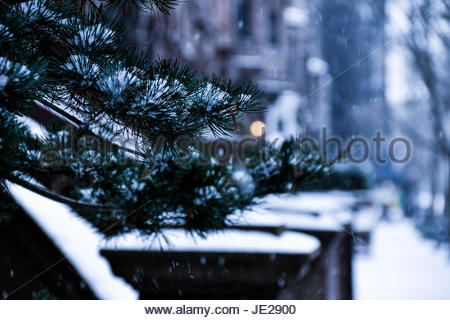 Snowy tree - Stock Photo