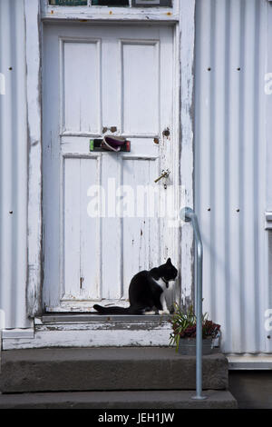 A black and white cat sitting outside a rustic front door. Reykjavik, Iceland. - Stock Photo