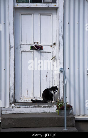 Domestic cat sitting by the front door of a country for Domestic front doors