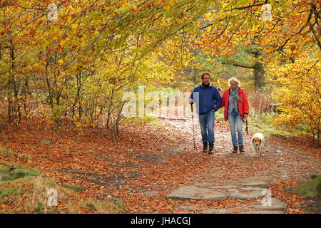 Man and woman walking dog through scenic autumnal woodland at Longshaw in the Peak District National Park, England - Stock Photo