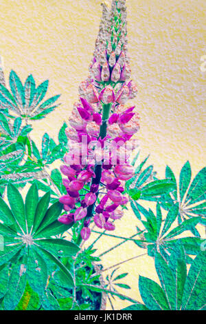 Artistic background with lupin blossom - Stock Photo