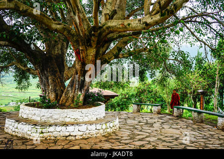 Thimphu, Bhutan - Aug 29, 2015. Sacred fig tree (Ficus religiosa) with a monk at Tibetan Buddhist temple in Bhutan. - Stock Photo