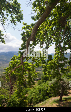 View of the Greek Orthodox monastery of Saint Sabbas the ...