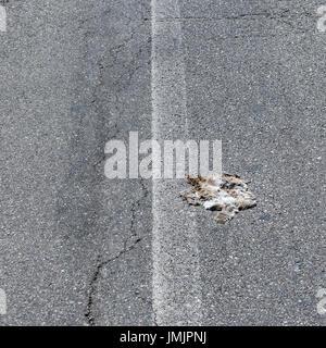 Roadkill on road - Stock Photo