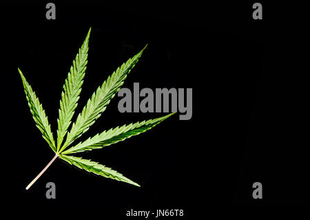 Cannabis Market Industry
