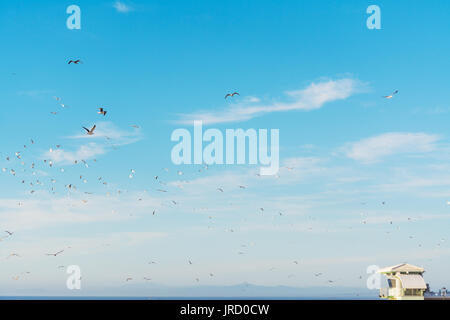 seagulls flying over La Jolla beach - Stock Photo