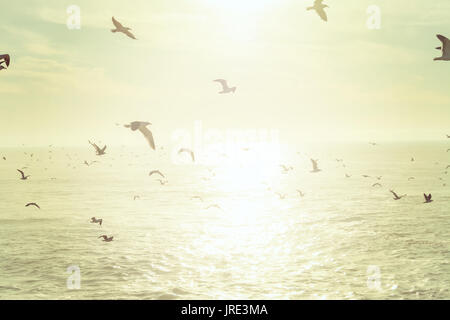 Flock of seagulls flying over the sea at sunset - Stock Photo