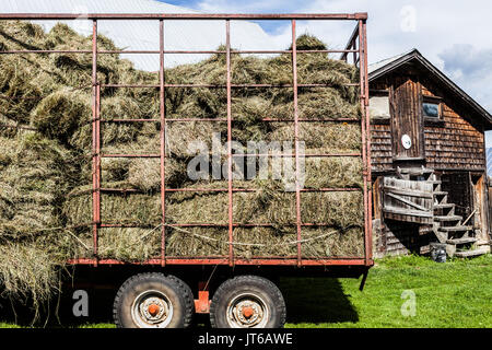 Old Farm Truck With Hay On Back Blue Stock Photo Royalty Free Image 4428482 Alamy