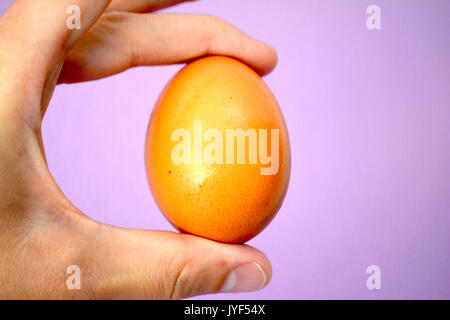Egg in hand - Stock Photo