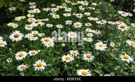 summer at Wellfield Botanic Gardens Elkhart Indiana Stock Photo ...