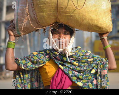 Middle-aged Indian Adivasi woman (tribal woman) with two distinctive golden nose studs, carrying on her head a heavy - Stock Photo