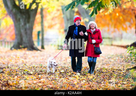 Senior couple are walking through the autumn woods with their pet dog. - Stock Photo