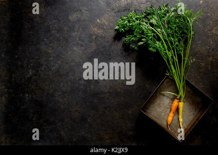 Fresh carrots on a dark background - Stock Photo