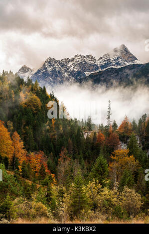 Mountain wood, single big conifer in front of the Laliderer Spitze in the Karwendel mountains - Stock Photo